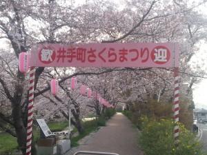 夜桜のライトアップで有名な井出町のさくら祭り