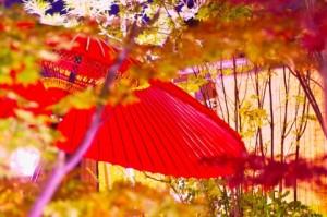 宇治で綺麗な穴場の紅葉