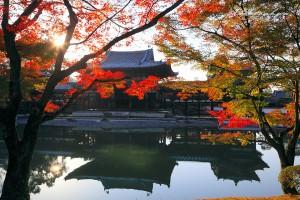 紅葉が綺麗な平等院鳳凰堂