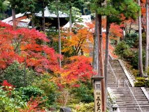 宇治の紅葉の穴場スポットである三室戸寺