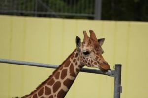 高校生カップルのデートにおすすめの動物園