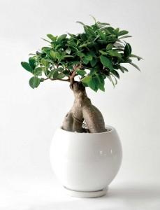 引っ越し祝いに贈る観葉植物
