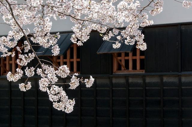 夜桜が綺麗な京都の穴場スポット