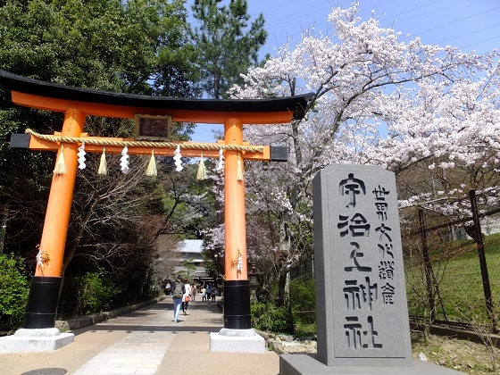 2015宇治の桜の名所である宇治上神社
