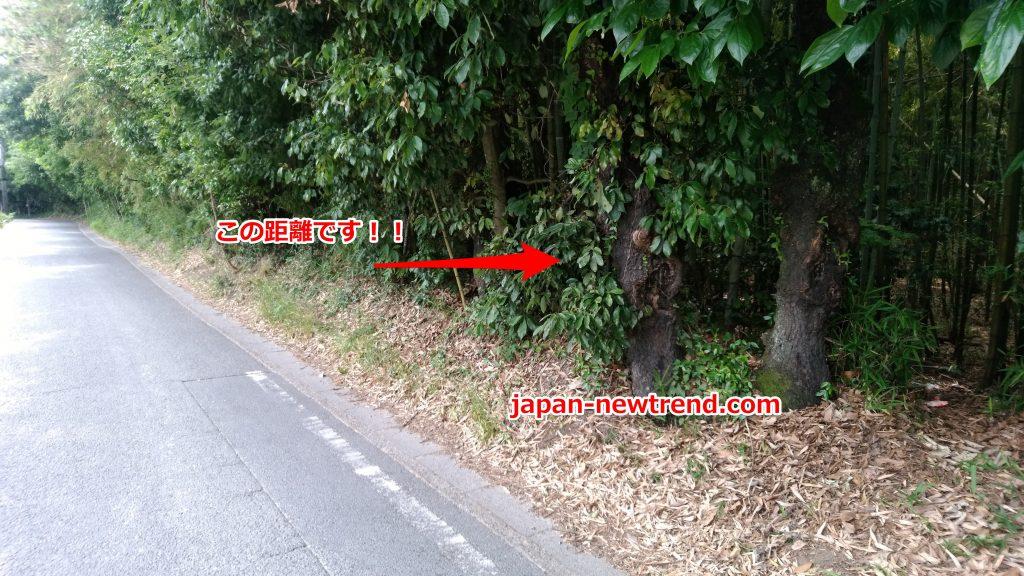 京都でクワガタが採集出来る穴場スポットの木