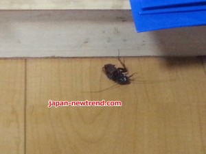 バルサンで退治・駆除したゴキブリ