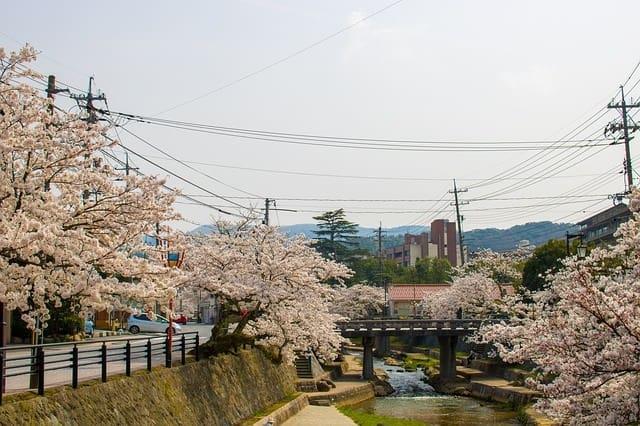 京都のお花見デートスポット