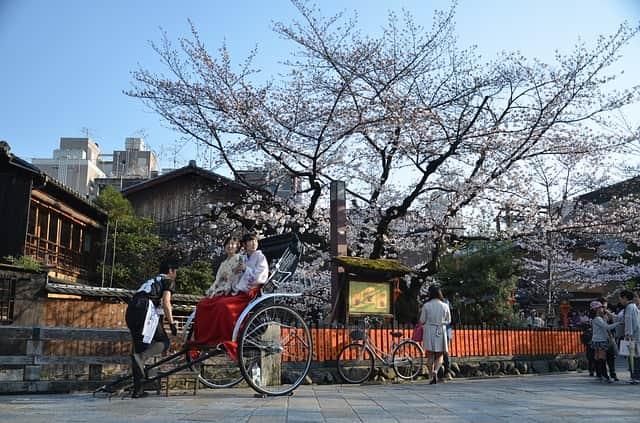 京都で夜桜が楽しめる穴場スポット