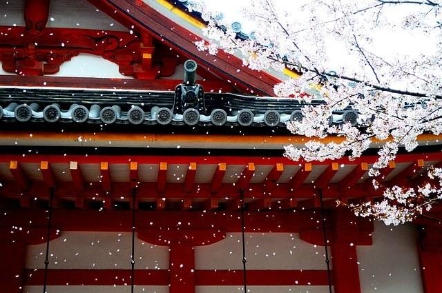 京都宇治市の桜