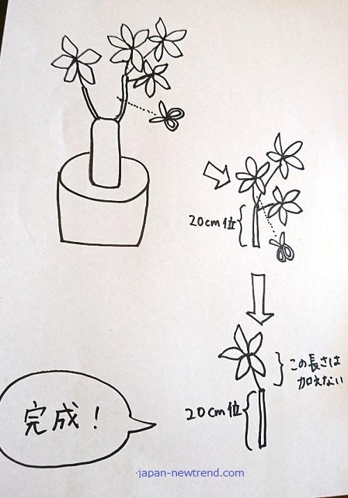 観葉植物のパキラの選定方法