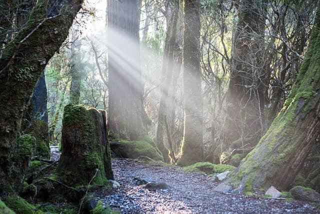 タスマニアの綺麗な森林